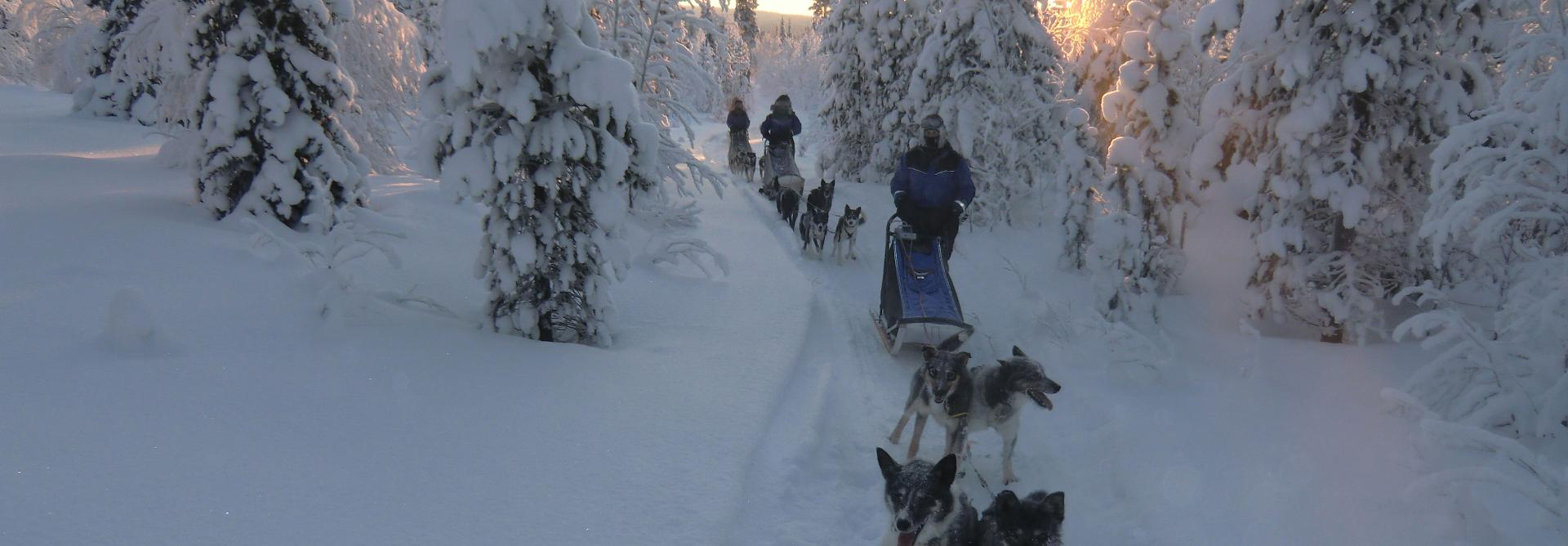 Dog Sledding Charity Challenge in Sweden