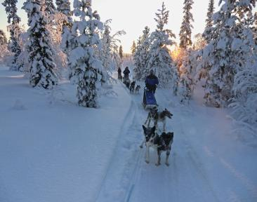 Dog Sledding Charity Challenge