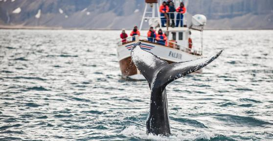 Iceland Charity Trek - Golden Circle & Whale Watching extension