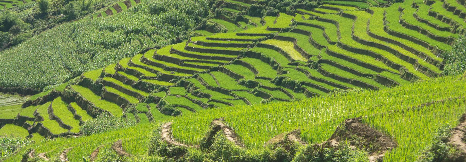 Vietnam Charity Trek through the Sapa Hill Tribes